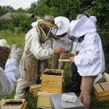 cours d'initiation à l'apiculture bio en Savoie