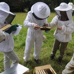 Cours d'initiation à l'apiculture en Bio
