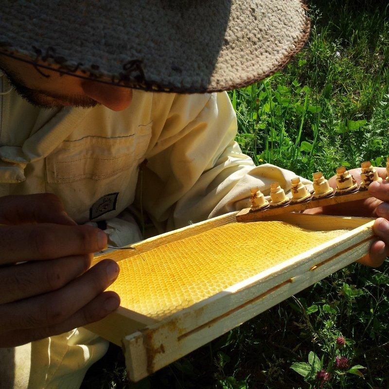 Cours d'élevage en apiculture